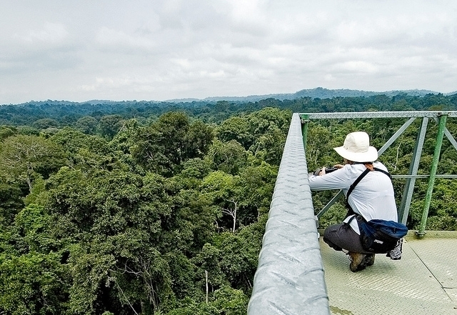 Amazon Observation Tower
