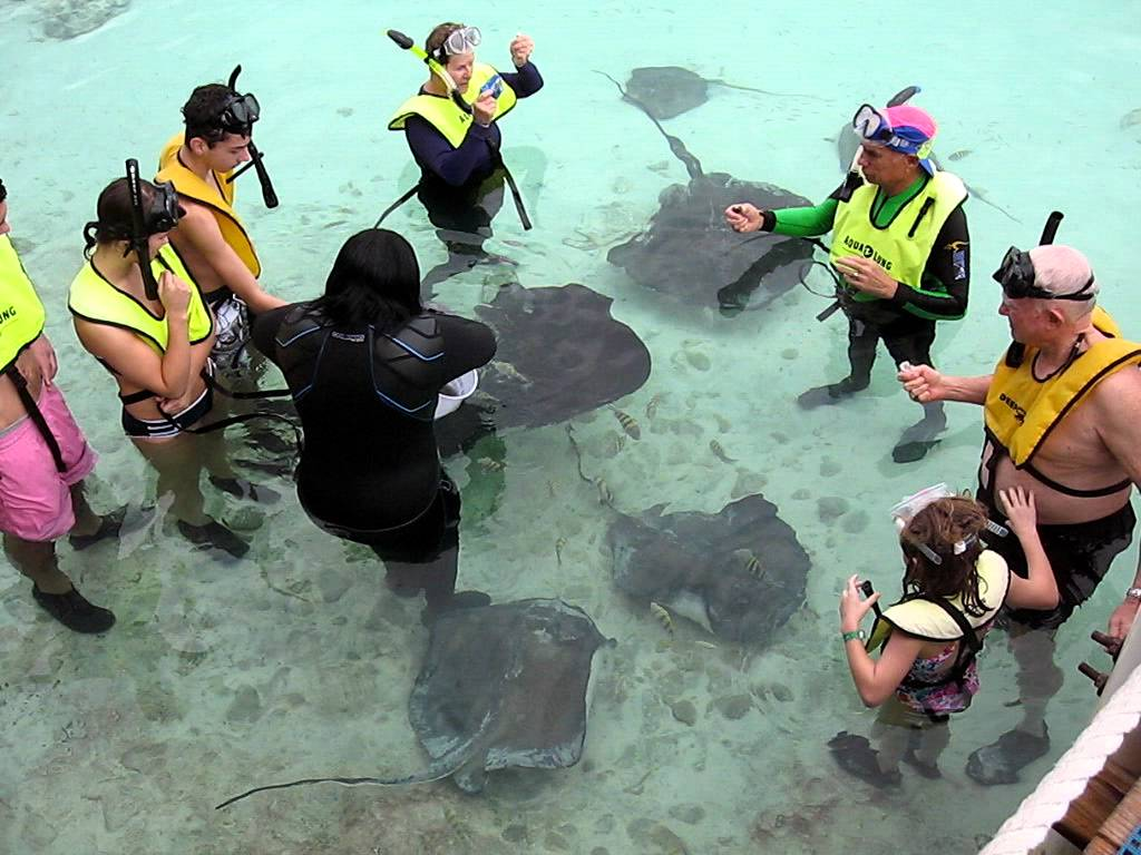 Sting ray encounter